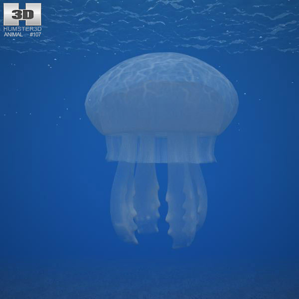 Common Jellyfish 3d model