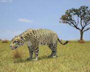 3D model of Jaguar