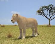 3D model of Lioness