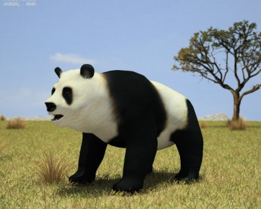 3D model of Giant Panda