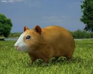 3D model of Hamster