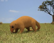 3D model of Silky Anteater