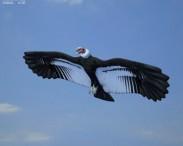 3D model of Andean Condor