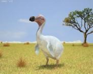 3D model of Dodo