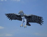 3D model of Harpy Eagle