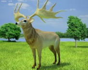3D model of Irish Elk