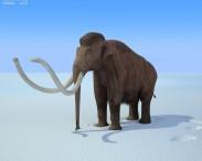 3D model of Mammoth