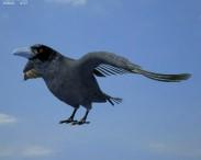 3D model of Common Raven