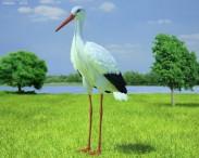 3D model of White Stork