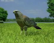 3D model of Red-Shouldered Hawk