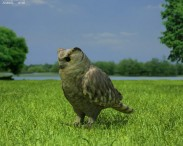 3D model of Eurasian Eagle-Owl