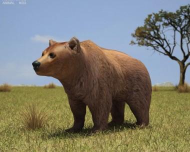 3D model of Brown Bear