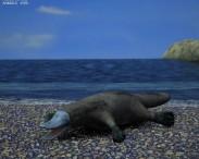 3D model of Platypus