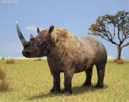 3D model of Black Rhinoceros