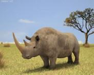 3D model of Woolly Rhinoceros