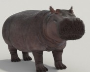 3D model of Hippopotamus High Detailed Rigged