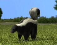 3D model of Skunk