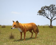 3D model of European Red Fox