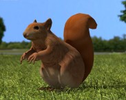 3D model of American Red Squirrel
