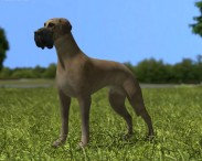 3D model of Great Dane