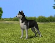 3D model of Siberian Husky