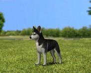 3D model of Siberian Husky Puppy