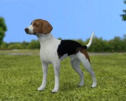 3D model of English Foxhound