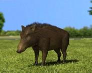 3D model of Wild Boar