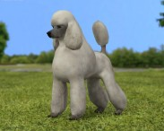 3D model of Poodle