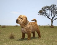 3D model of Shar Pei Puppy