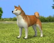 3D model of Akita Inu