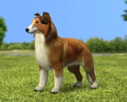 3D model of Rough Collie