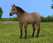 3D model of American Quarter Horse