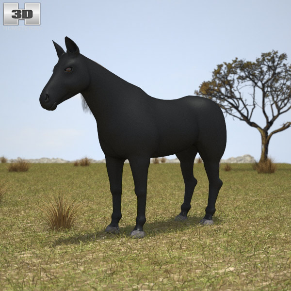3D model of Rocky Mountain Horse