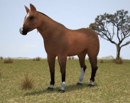 3D model of Thoroughbred