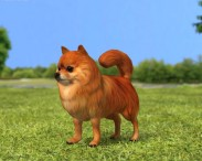 3D model of Pomeranian