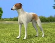 3D model of Greyhound