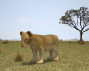 3D model of Lion Cub