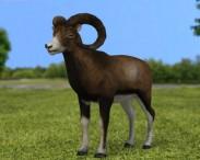 3D model of Mouflon