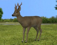 3D model of Roe Deer