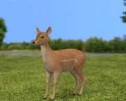 3D model of Fallow Deer Fawn