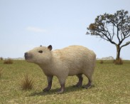 3D model of Capybara