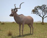 3D model of Greater Kudu