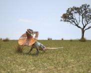 3D model of Frill-Necked Lizard