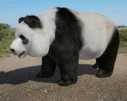 3D model of Giant Panda High Detailed Rigged