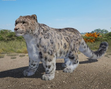 3D model of Snow Leopard High Detailed Rigged
