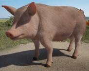 3D model of Pig HD