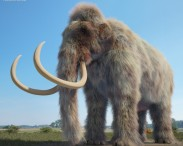 3D model of Mammoth HD